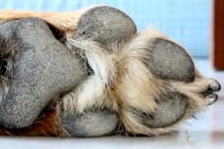 The underside of a dog's foot is built for traction.