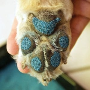 Pawfriction Applied On Pet Paws