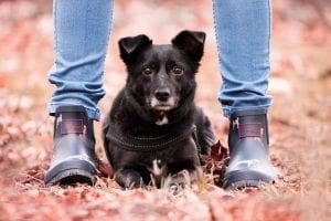 Dogs Love Feet Licking