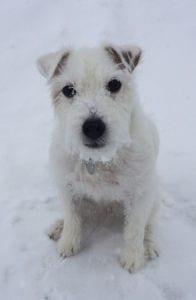 Bailey  -Pawtology Senior Pet