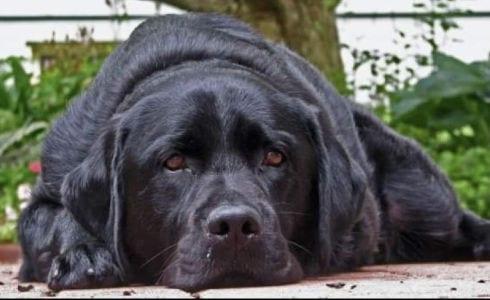 Taylor -Pawtology Senior Pet