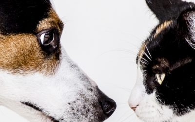 What to Do for Senior Dogs and Senior Cats That Have Itchy or Irritated Skin