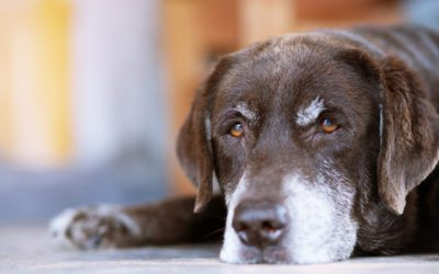 Would a Joint Supplement For My Senior Dog or Cat Help Them Feel Better?