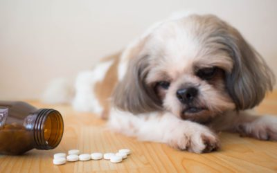 Are There Any Risks or Side Effects for My Dog or Cat if They Take a Supplement?